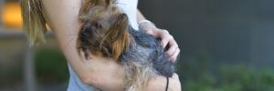 犬の管理システムのイメージ